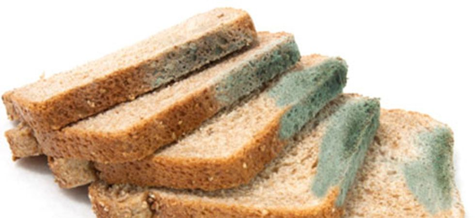 Never Eat The Clean Part Of A Moldy Bread Or Sandwich Here S Why News Nation English
